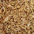 שמיר זרעים 100 גרם - הרבה סנטר
